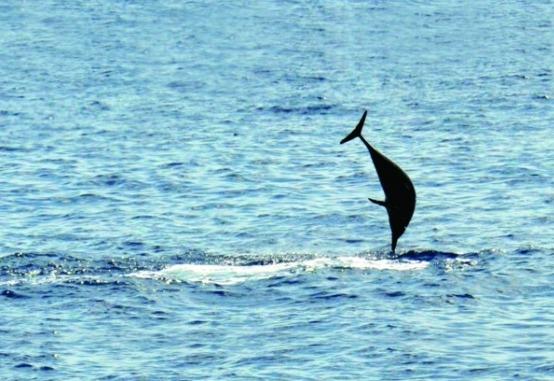 西沙群岛位于南海的西北部,距海南岛大约有180多海里,在中国